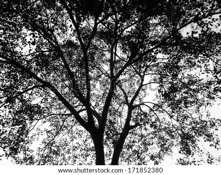 Silhouette tree - stock photo
