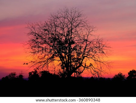 silhouette tree against pink sunset at background