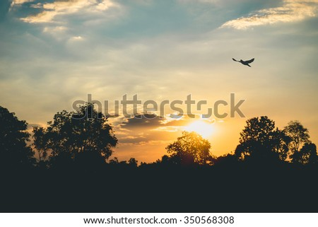 Silhouette tree and blue sky many cloud,sunset - stock photo
