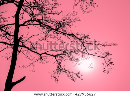 Silhouette tree branch of Lagerstroemia loudonii in red background