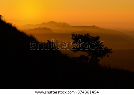 Silhouette tree on mountain slope at sunrise.