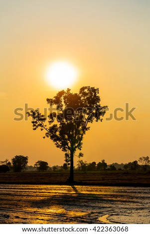 Silhouette tree with sunset sky