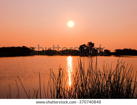 silhouette trees at background and grass  foreground of sunset over lake picture