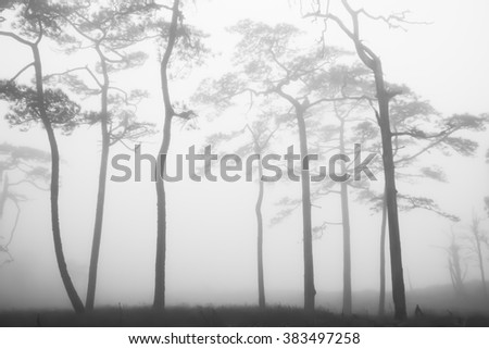 Silhouette trees in the forests with fog in winter - stock photo