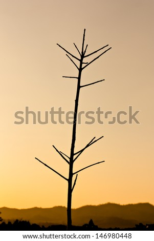 Silhouette view of deciduous rubber tree under twilight sky