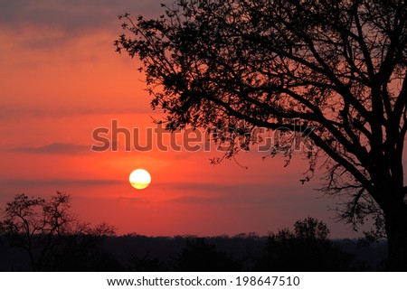 Silhouetted African savanna tree at sunrise, South Africa - stock photo