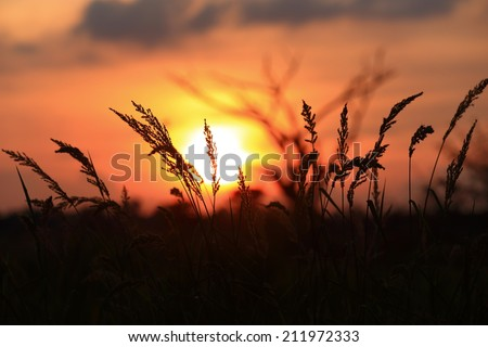 Silhouetted Grass and sunset dry twigs background color red orange yellow sky