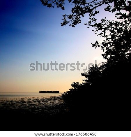 Silhouetted mangroves of the Florida coast at Everglades National Park - stock photo