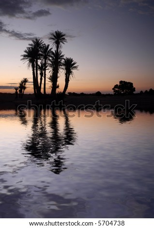 Silhouetted palm trees near the lake in the Sahara Desert, Morocco, at sunrise - stock photo