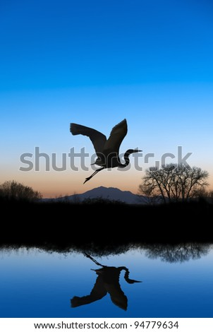 Silhouetted Snowy Egret flying at sundown over quiet Winter pond on wildlife refuge, Mount Diablo in bacground, San Joaquin Valley, California