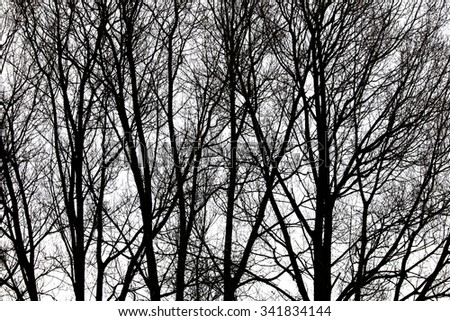 Silhouetted tree - stock photo