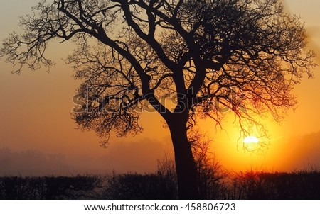 silhouetted tree by sunrise
