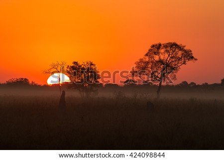 Silhouetted trees and termite mounds on a misty morning sunrise in the Pantanal, Brazil