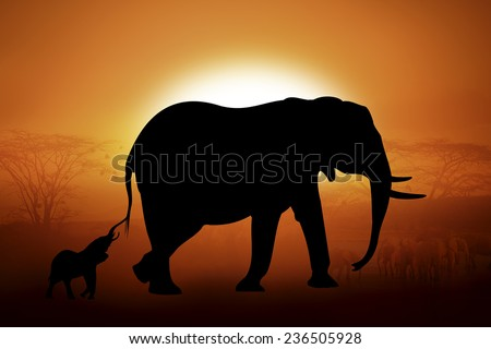 Silhouettes elephants against the sunset in Africa - stock photo