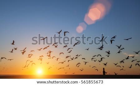 stock photo silhouettes flock of birds over the atlantic ocean during sunset seagulls and albatross 561855673 - Каталог — Фотообои «Закаты, рассветы»