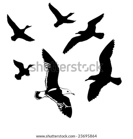 silhouettes flying birds on white background - stock photo