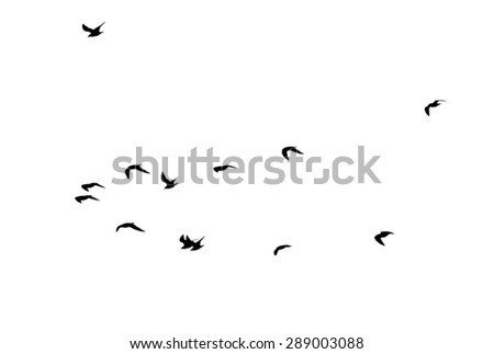 silhouettes of a flock of birds on a white background - stock photo
