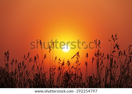 Silhouettes of a grass against a rising sun in the fog