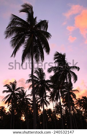 Silhouettes of beautiful palms on the beach during sunset