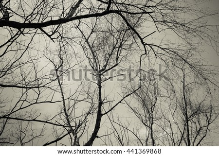 Silhouettes of branches tree Black and white style.