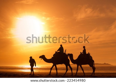 silhouettes of camels at sunset - stock photo