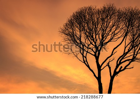 Silhouettes of Dead Tree without Leaves at sunset time