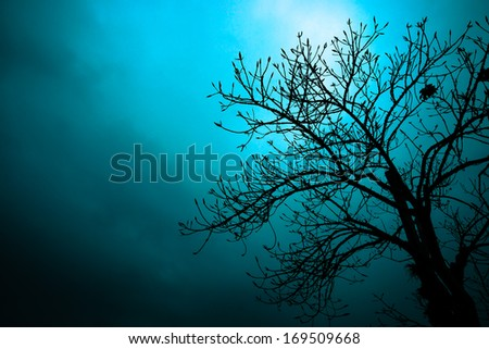 Silhouettes of dead trees in the night. - stock photo