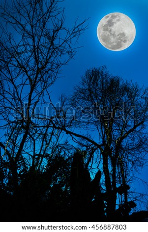 Silhouettes of dry tree against blue sky and beautiful full moon at night. Beauty of nature use as background. Outdoors. The moon were NOT furnished by NASA.