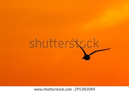 Silhouettes of flying bird in the sky at sunset.