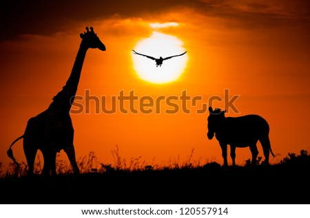 Silhouettes of giraffe, zebra and pelican against the African sunset - stock photo