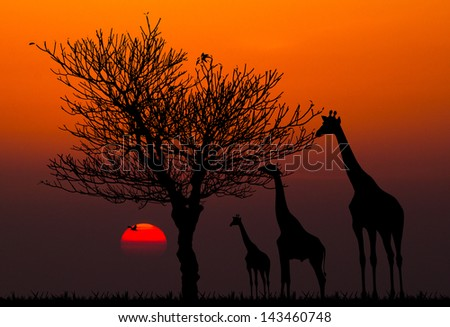 silhouettes of Giraffes and dead tree against sunset background - stock photo