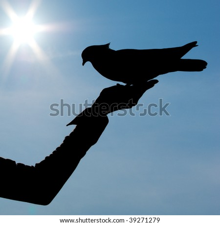 Silhouettes of girl and pigeon. Conceptual design. - stock photo