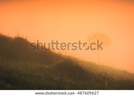 Silhouettes of lonely tree in the fairy mist at sunrise light