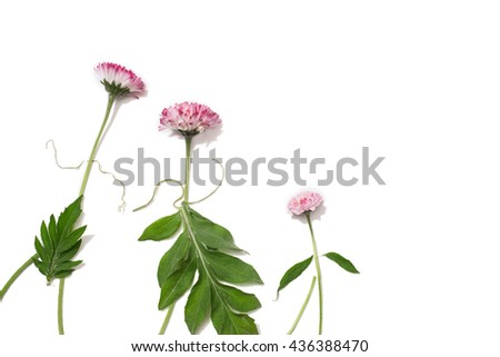 Silhouettes of men, women and children from the field of bright pink flowers on an isolated background. Flower family holding hands. Summer natural pattern on a white surface. View from above - stock photo