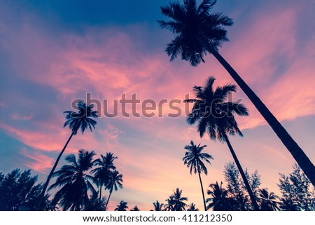 Silhouettes of palm trees against the sky at dusk. - stock photo