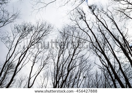 Silhouettes of the bare trees against the cloudy sky