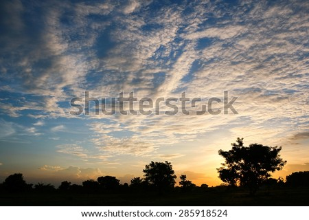 Silhouettes of the tree with clouds.In sunset time. - stock photo