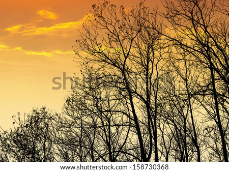 silhouettes of the trees in sunset - stock photo