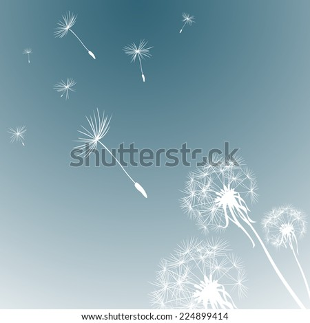 silhouettes of three dandelions in the wind - stock photo