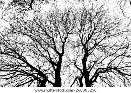 silhouettes of trees branches  - stock photo