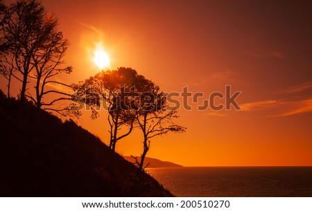 Silhouettes of trees on the coast of Gibraltar strait, Morocco - stock photo