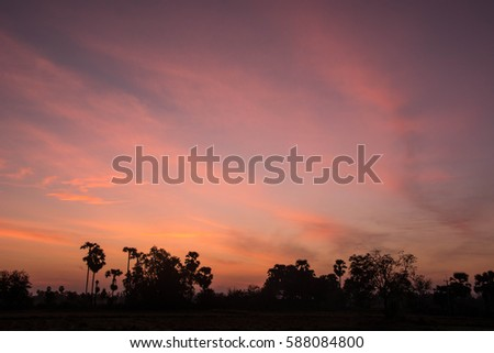 Silhouettes tree on sunrise and orange sky