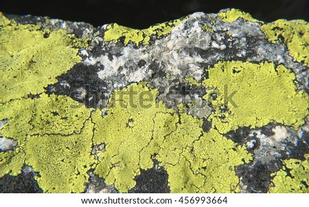 Siliceous rock covered with yellow lichen - stock photo
