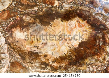 Silicified tree - stock photo