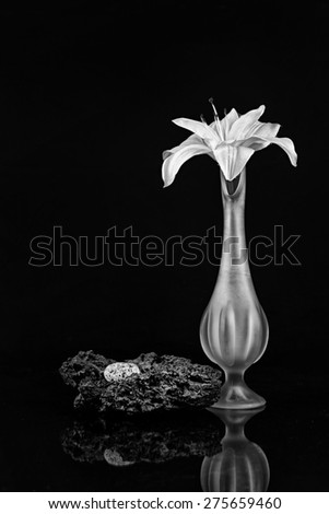 Silk Lily in a Tall Bud Vase with Granite and Lava Rock in Black and White - stock photo