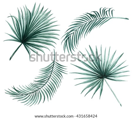 Silk palm and fan palm green leaves tropical exotic watercolor  botany spring summer Hawaii beach , design object print textile backdrop,wallpaper isolated on white background - stock photo