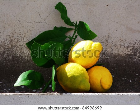 Sill life showing fresh lemon fruits with a weathered wall background
