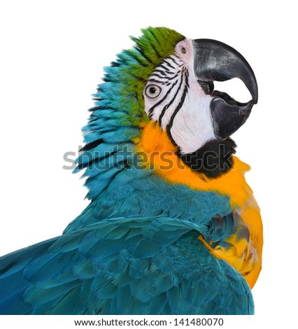 Silly Blue and Gold Macaw - stock photo
