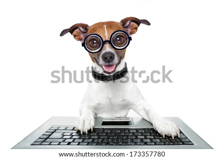 silly computer dog looking directly at you - stock photo