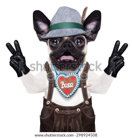 silly crazy  pug dog dressed up as bavarian with gingerbread as collar, isolated on white background, and victory or peace fingers, surprised or shocked